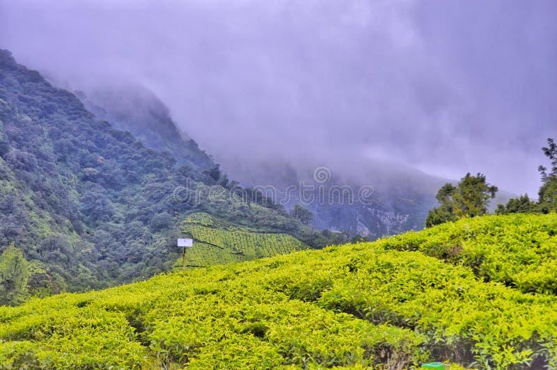 Munnar Kerala photos libres de droits