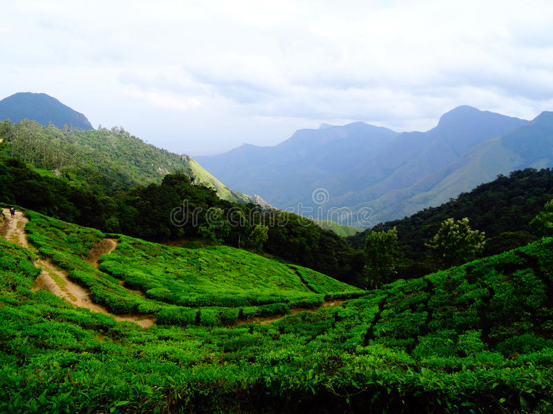 Munnar tea hills royalty free stock images