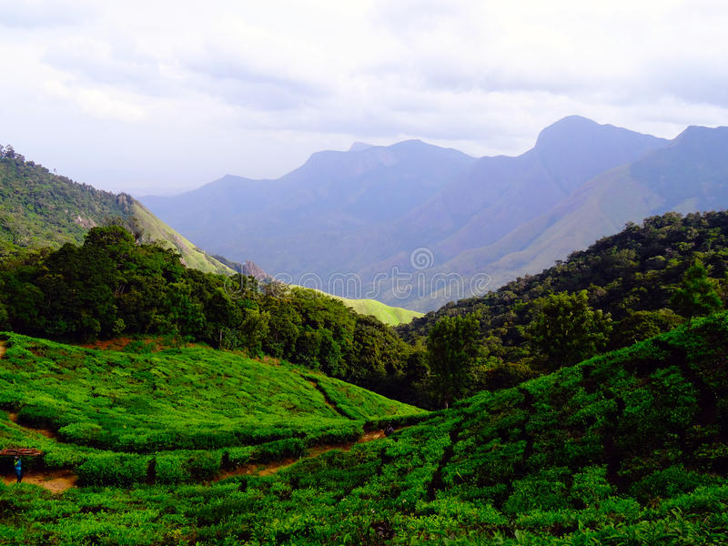 Munnar tea hills royalty free stock image