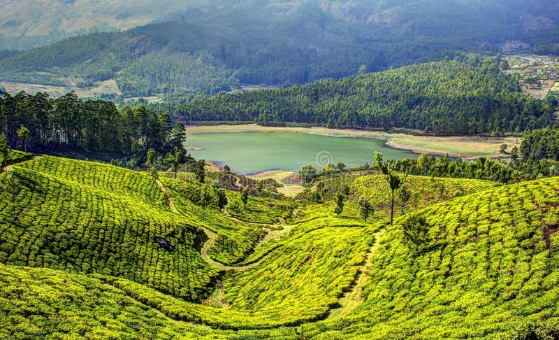 Munnar-Teeplantagen stockfotografie
