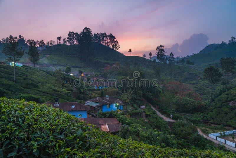 Munnar tekoloni på den lilla byn för solnedgångkerala Indien gräsplan arkivbilder