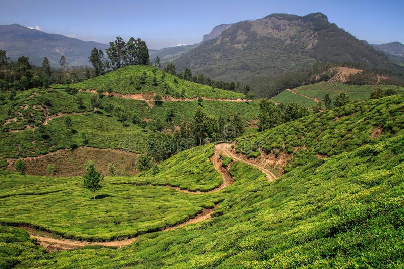 View of the green lush tea hills and mountains around Munnar, Kerala, India. Munnar is a town and hill station located in the Idukki district of the southwestern royalty free stock image