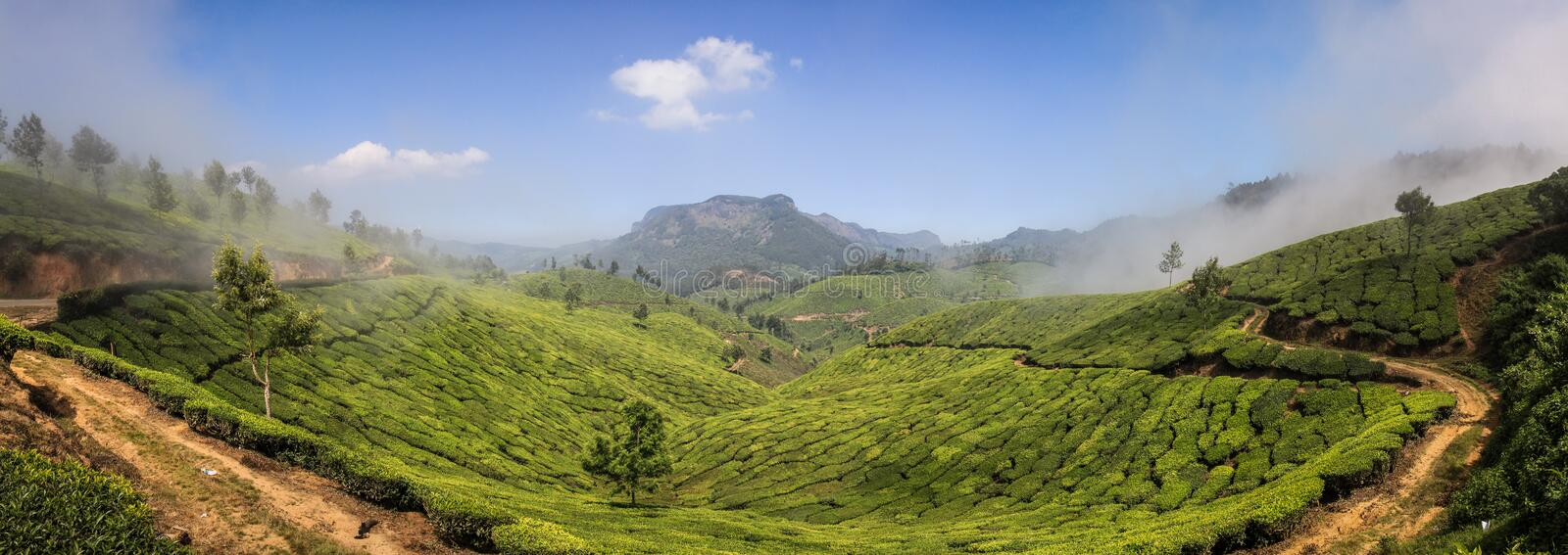 View of the green lush tea hills and mountains around Munnar, Kerala, India. Munnar is a town and hill station located in the Idukki district of the southwestern stock photo