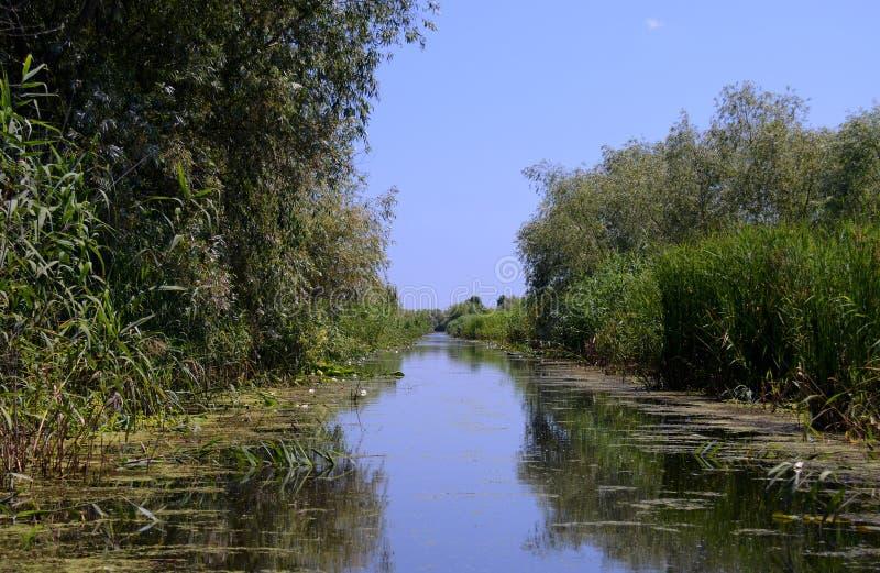 Munnen av Donauen som ?r bevuxen med den gr?na rottingen med b?da sidor av floden under bl?a himlar royaltyfria bilder
