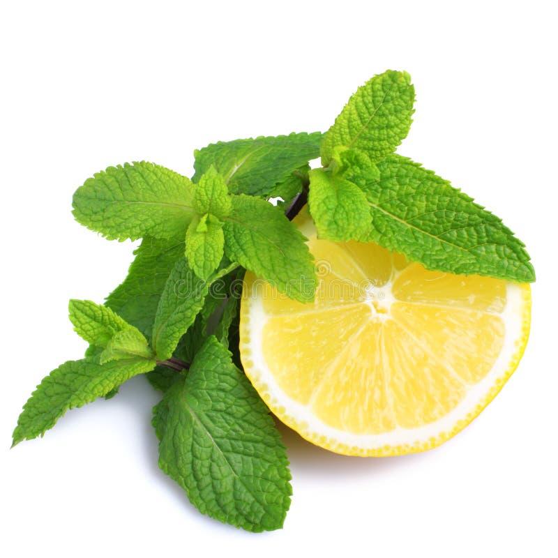 Munt en citroen stock fotografie