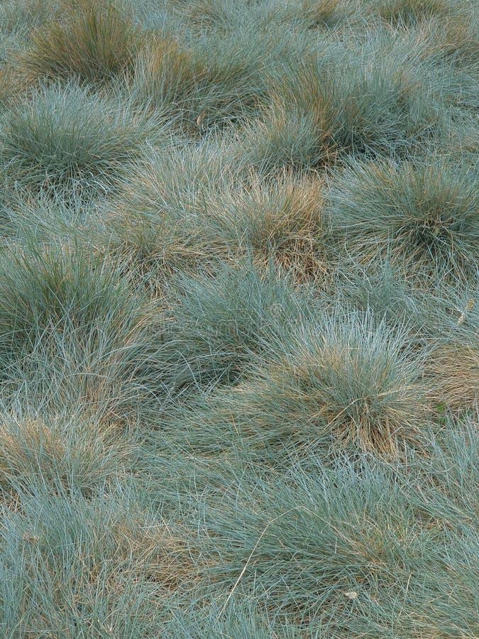 Munt groene achtergrond, grastextuur, grasachtergrond royalty-vrije stock afbeelding