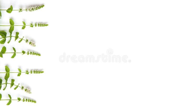 Muntgras met bloemen op witte achtergrond Grote plaats voor uw tekst De ruimte van het exemplaar royalty-vrije stock afbeelding