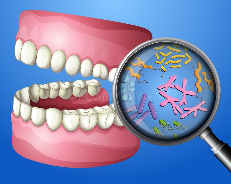Muntliga bakterier för en närbild royaltyfri illustrationer