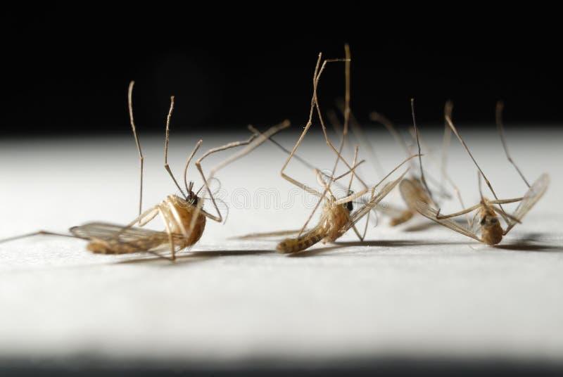 Muoiono le zanzare fotografia stock