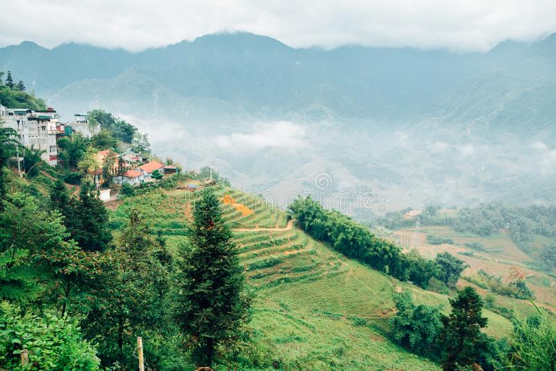 Muong Hoa谷露台的米领域在Sapa,越南 库存图片