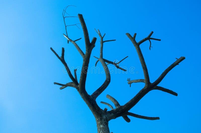 Muore l'albero con cielo blu fotografia stock libera da diritti