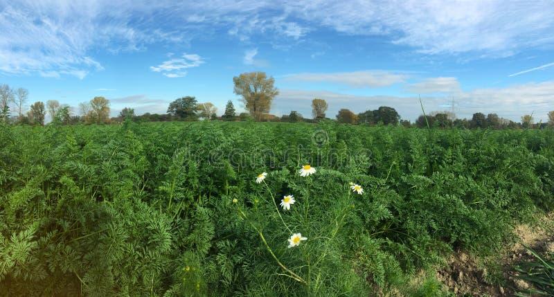 Muovendosi della pianta e dell'albero molli del fuoco dalla vista di panorama del vento con bei cielo blu e nuvola immagini stock