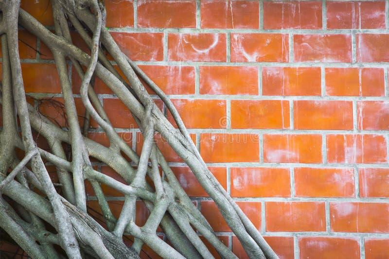 Download Mur image stock. Image du configuration, vieux, construction - 45353553