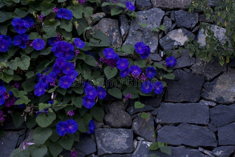 Mur avec des fleurs photo libre de droits