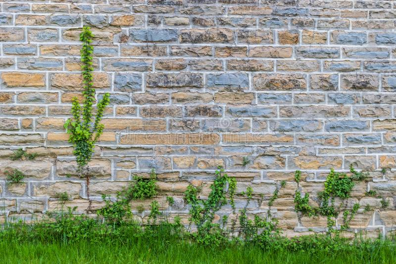 Mur avec les briques et les usines colorées images stock
