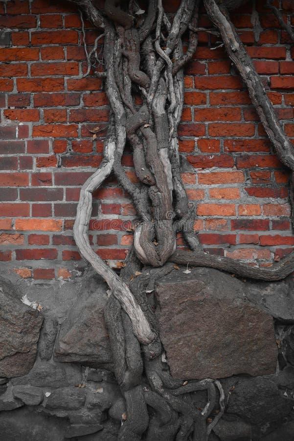 Mur avec un arbre images libres de droits