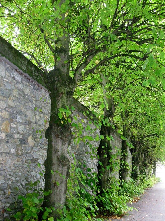 Mur bordé d'arbres en Irlande photos stock