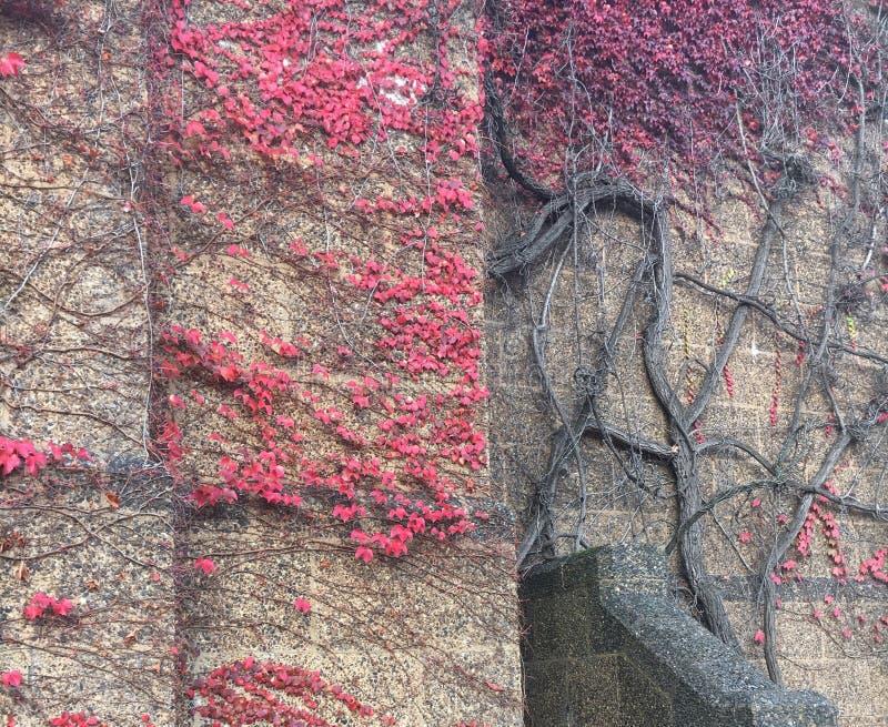 Mur d'amour images stock