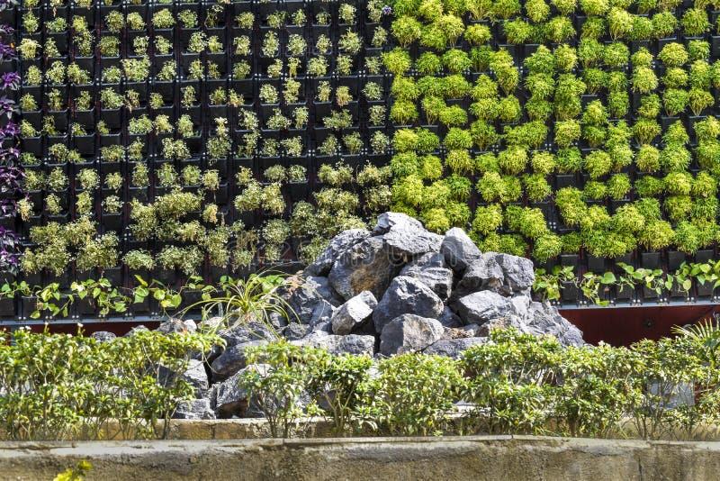 Mur d?cor? bon naturel con?u par la plante, la fleur et le premier plan rocheux photographie stock