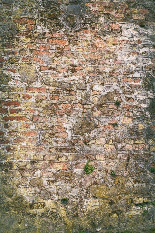 Mur de briques avec de la mousse images stock