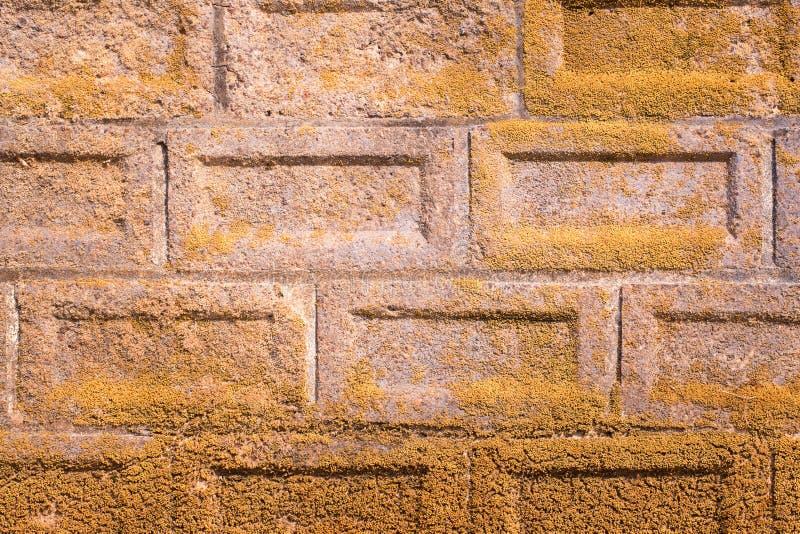 Mur de briques avec de la mousse s'élevant hors de elle images stock