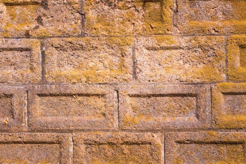 Mur de briques avec de la mousse s'élevant hors de elle photos libres de droits