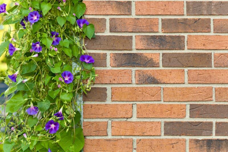 Mur de briques avec des fleurs photo stock