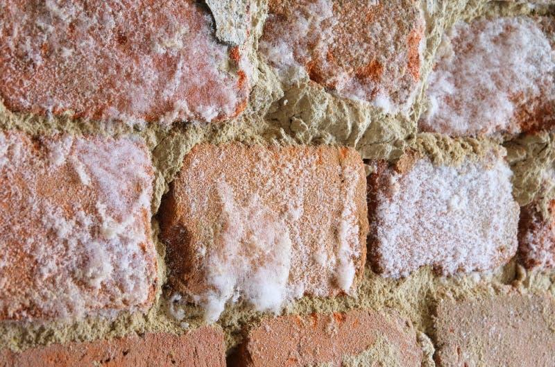 mur avec le champignon de moule photo stock image du fa ade stonewall 30205798. Black Bedroom Furniture Sets. Home Design Ideas