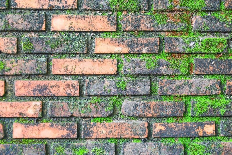Mur de briques complètement avec de la mousse verte images libres de droits