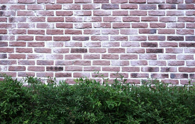 Mur de briques et fond de Zereeba photos stock