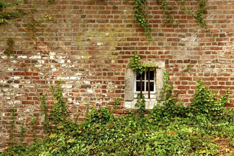 mur de briques Lierre-élevé d'un vieux bâtiment avec une petite fenêtre de cave photo stock