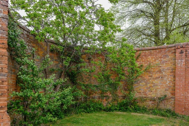 Mur de briques rouge antique incurvé avec des arbres et des arbustes s'élevant près de lui images libres de droits