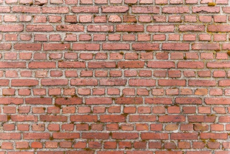 Mur de briques rouge superficiel par les agents photographie stock libre de droits