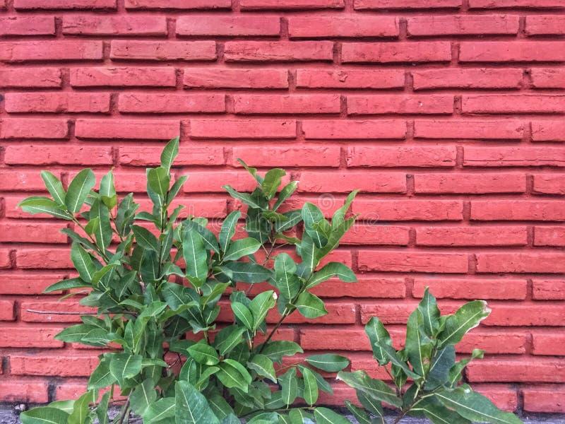 Mur de briques rouges photo stock