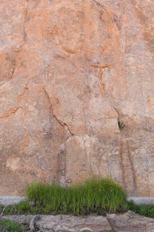 Mur de roche de correction d'herbe photo stock