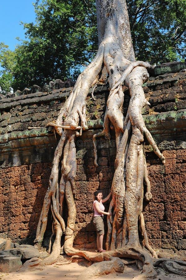 Mur de temple avec un banian géant images stock