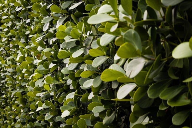 Mur de vert photo libre de droits