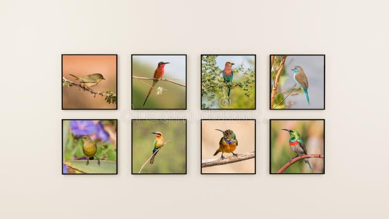 Mur des oiseaux images libres de droits