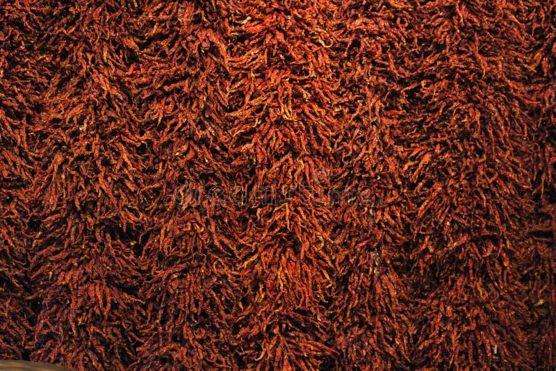 Mur des piments rouges secs photo stock