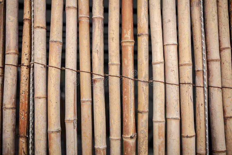 Mur en bambou sec attaché avec le fond de texture de corde, fond en bambou de barrière, modèle en bambou de bâton images stock