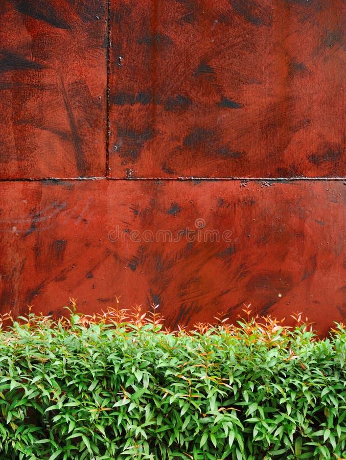 Mur en métal avec la plante verte comme barrière ci-dessous photographie stock libre de droits