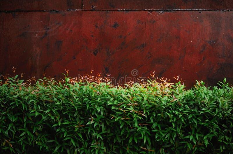 mur en métal avec le fond de plante verte photos libres de droits