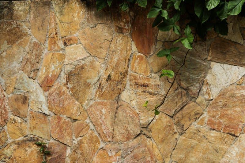 Mur en pierre avec l'usine de plante grimpante dans le coin supérieur droit image libre de droits