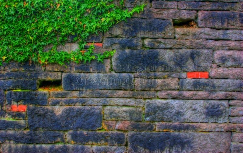 Mur en pierre avec le lierre image stock