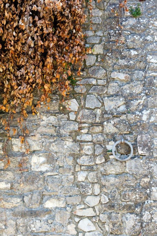 Mur en pierre avec le lierre vert photos libres de droits