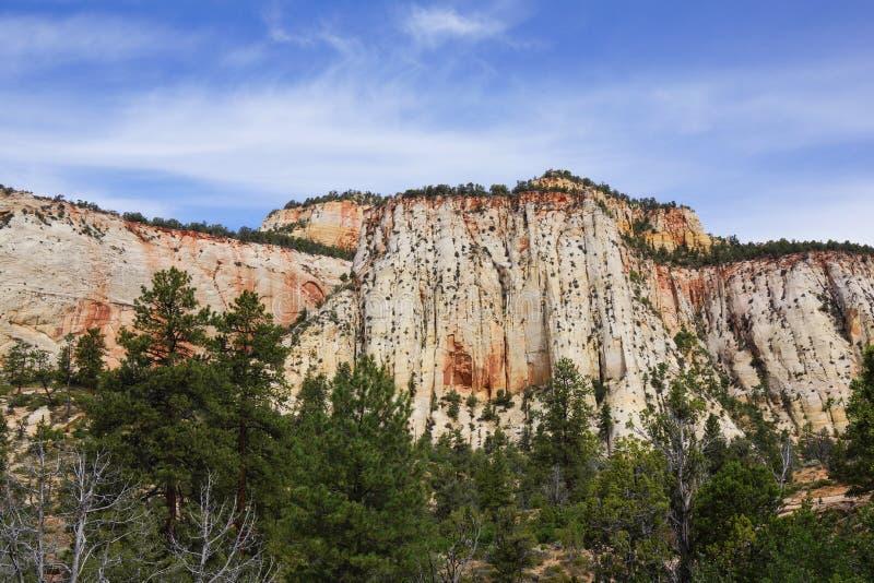 Mur en pierre blanc énorme en canyon de zion de l'Utah images stock