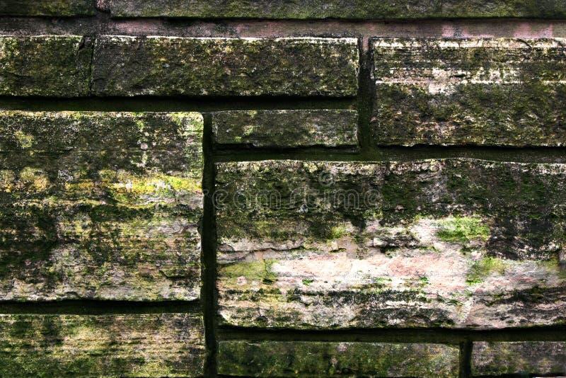 Mur en pierre croissant de mycète images libres de droits