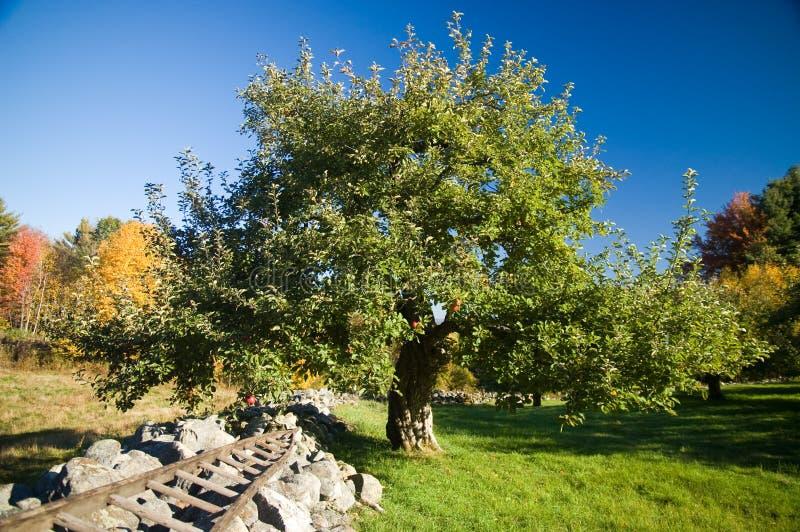 mur en pierre d'arbre de pomme photos libres de droits