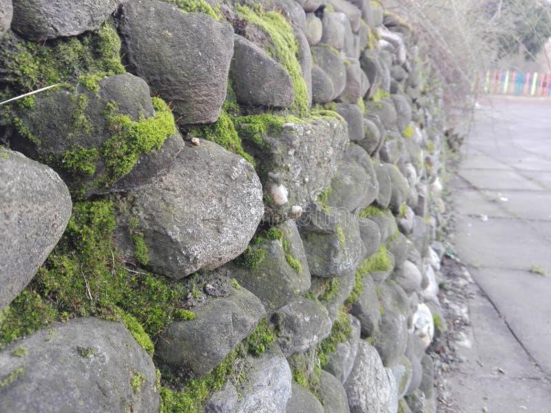 Mur en pierre de mousse photographie stock
