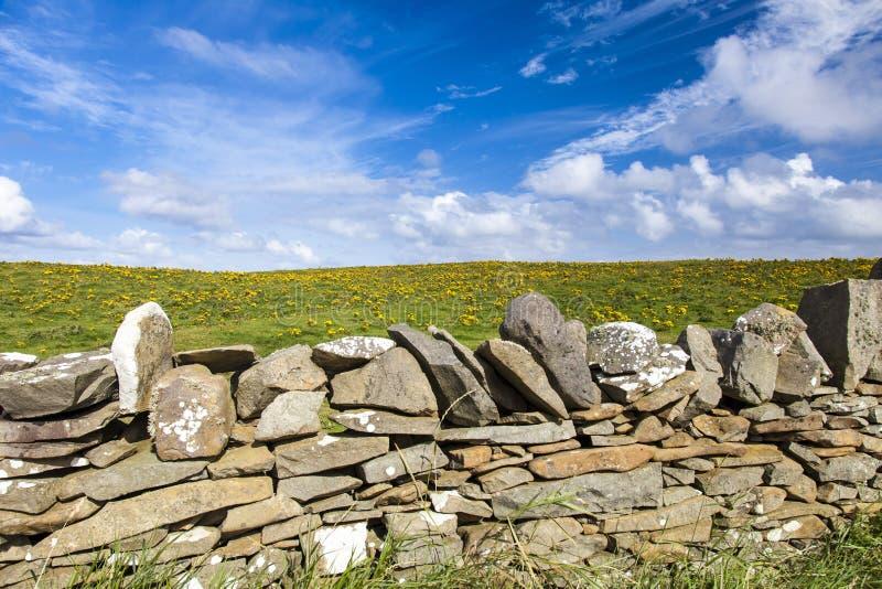 Mur en pierre devant un pré fleuri jaune photographie stock libre de droits